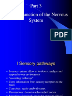 Nervous System Part Three Sensory Function