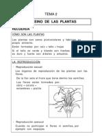 2-las-plantas
