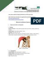Anatomia i - Musculos_membros_superiores