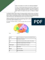 Como Comprende El Cerebro