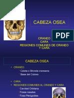 12-cabezaosea-100406220803-phpapp01