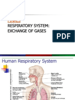 Respiratory Systemppt