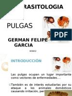 Expo Pulgas