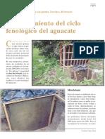 Aguacate II Espanol
