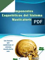 componente eskeletico del sistema mastktorio