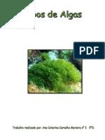 Tipos de Algas- Portugues