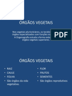 ORGAOS_VEGETAIS