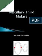 (Oral Ana) Max 3rd Molars