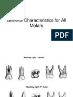 (Oral Ana) Molars Gen Characteristics