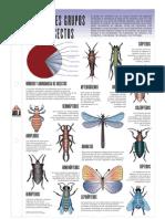 Grupos de Los Insectos