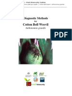 Diagnostic Methods for Cotton Boll Weevil 2011