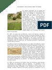 El Ingenio Azucarero _San Antonio Abad