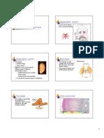 Glucocorticoids (1)