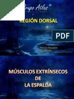 Grupo Atlas Anatomia Region Dorsal