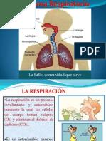 Sistema Respiratorio 2011