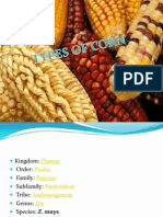 TYPES OF MAIZE