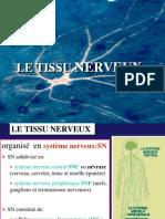 4-tissu_nerveux_4
