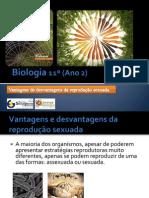 ppt 17 - Vantagens e desvantagens da reprodução sexuada[1]