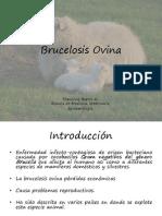 Brucelosis Ovina