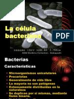 ATLAS Microbiologia Sección celula bacteriana