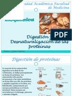Digestion de Proteinas