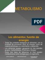 Metabolismo David