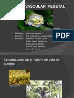 Sistema Vascular Vegetal