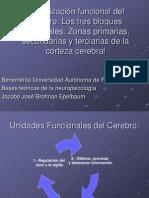 16647107 Organizacion Funcional Del Cerebro