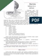 Curs Anatomie Coafor