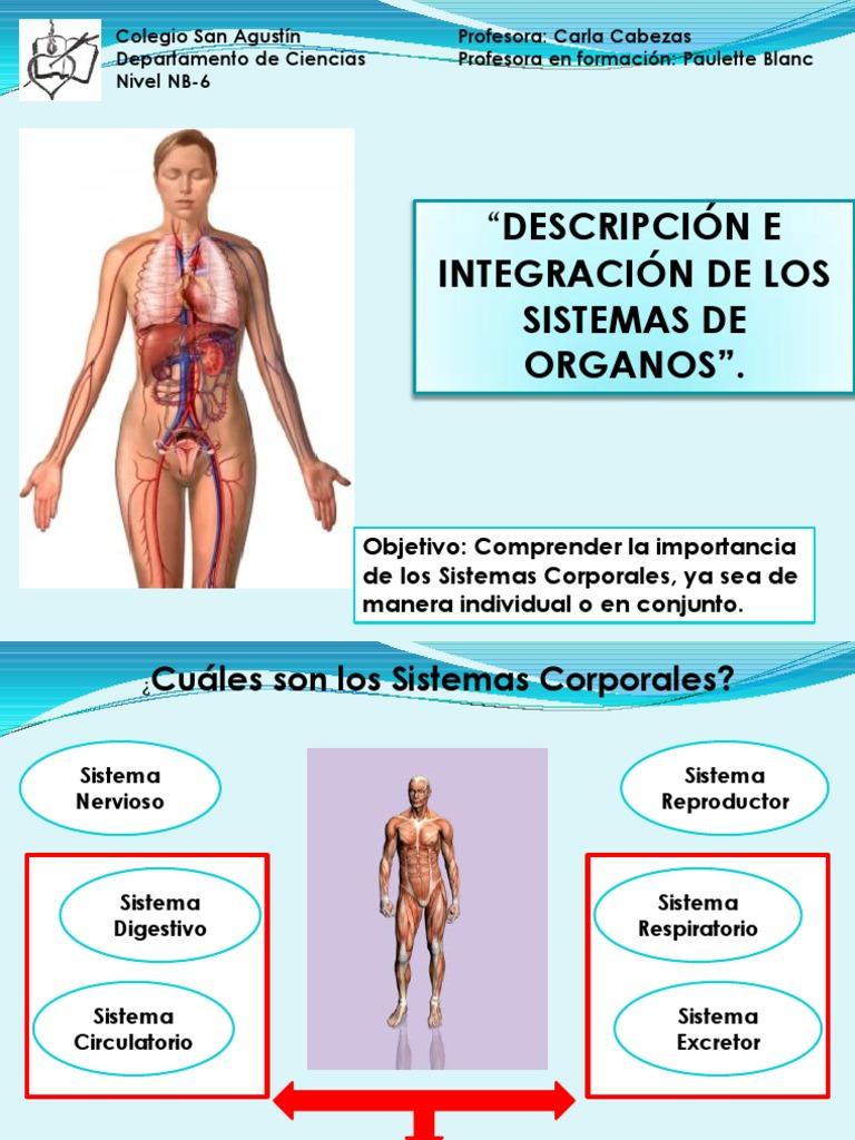 sistemas_de_organos_nuevo_y_final (2)