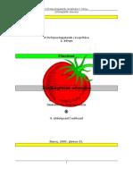002 - Eltevések - Zöldségfélék Eltevése