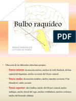 Bulbo Raquídeo