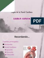 Capas de La Pared Cardiaca