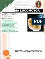 TRABAJO EMBRIOLOGIA Sistema Locomotor y Muscular