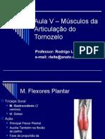 Aula v – Músculos Da Articulação Do Tornozelo-98