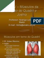 Aula IV – Músculos Da Região Do Quadril-98