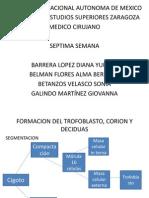 Trofoblasto y Placenta. Equipo 7