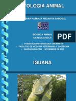 Etología Iguana