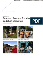 Rescued Animals Receive Buddhist Blessings _ Humane Society International