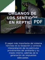 Organos de Los Sentidos Reptiles3
