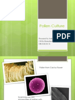 Anther or Pollen Culture