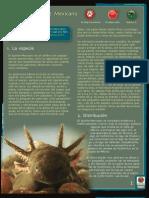 Axolotl o Ajolote Mexicano