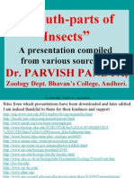 10 Insect Mouth Parts