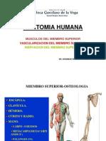 (Clase Musculos Vascularizacion e Inervacion Del MM.ss. (1)