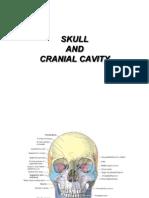 Skull and Cranial Cavity