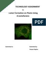 Tumor Formation Using A. Tumefecians