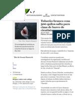 notícias tubarão branco jornalístico