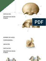 Ejercicio Huesos de Craneo Huesos