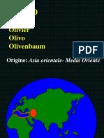09 OLIVO stal 1