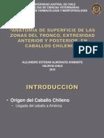 ANATOMÍA DE SUPERFICIE DE LAS ZONAS DEL TRONCO